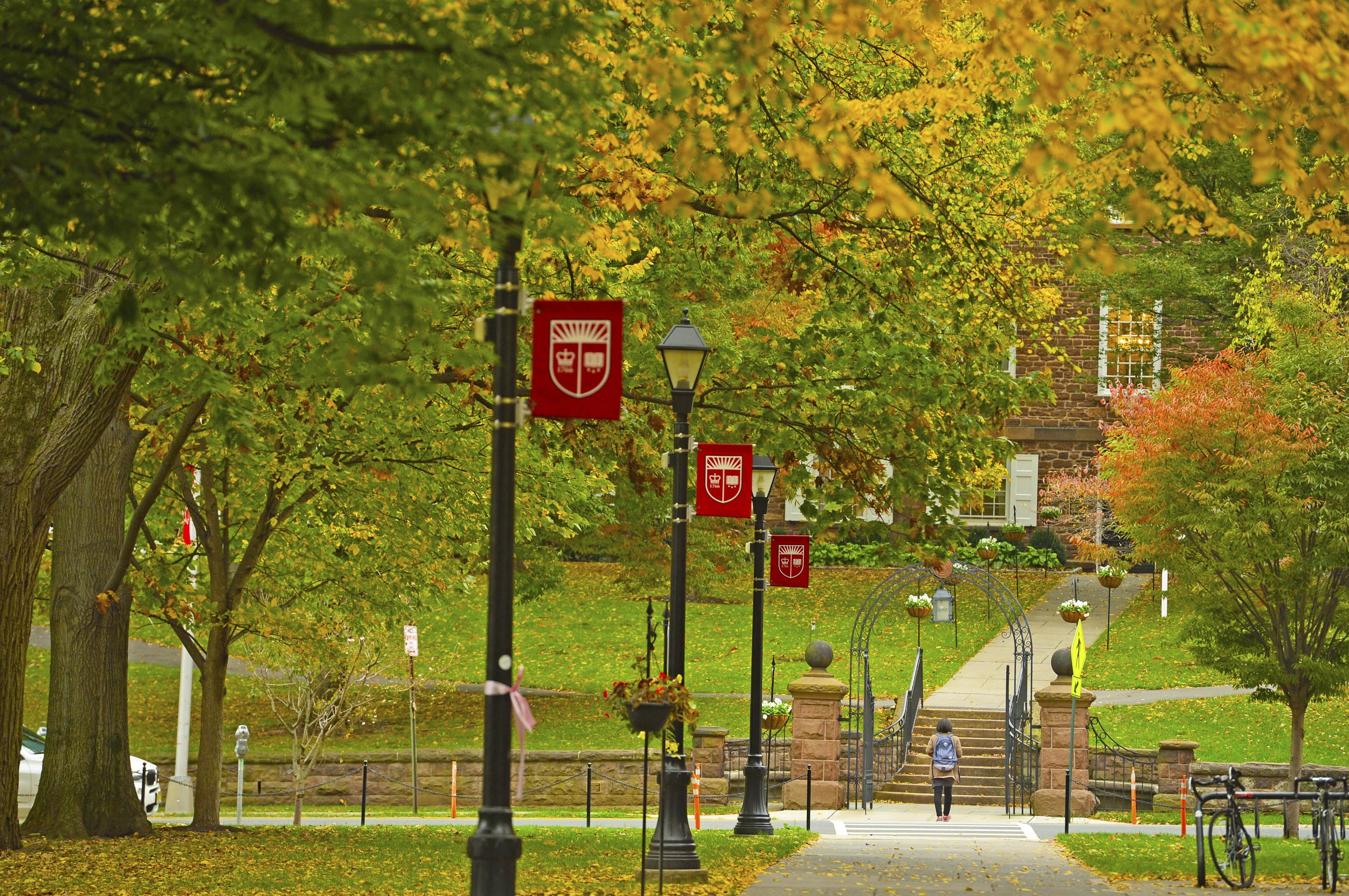 Fall tree line Voorhees Mall on College Avenue Campus