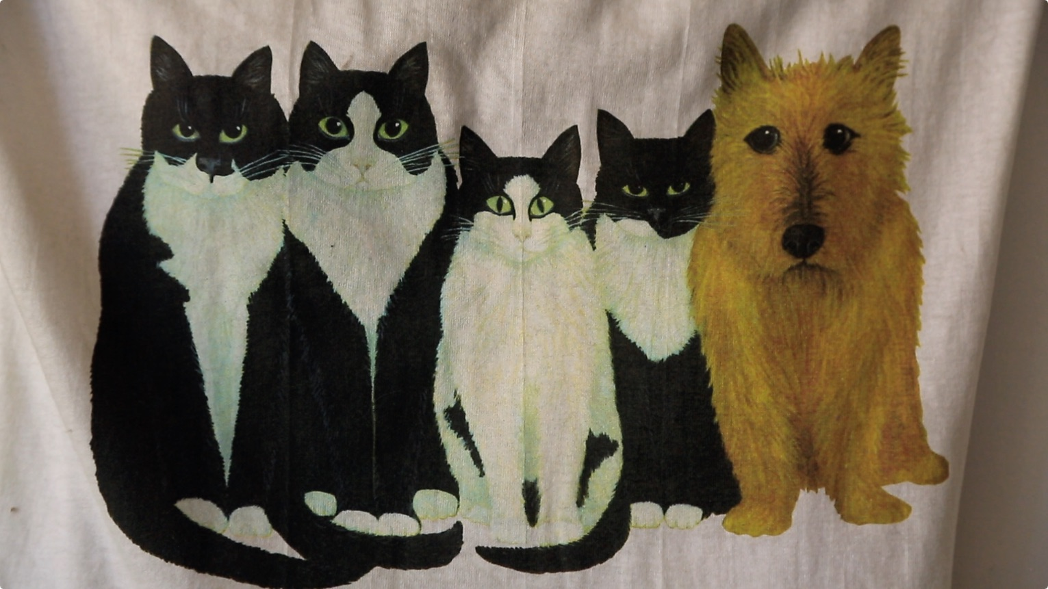 blanket of cats and one dog